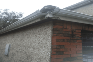 Fascia and Soffit Replacement in Dublin